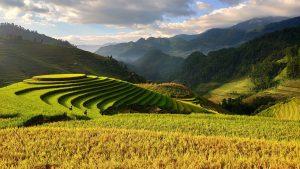 Wysokiej jakości nowoczesne maszyny rolnicze
