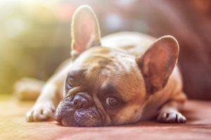 Zabawki dla psa - które warto kupić?