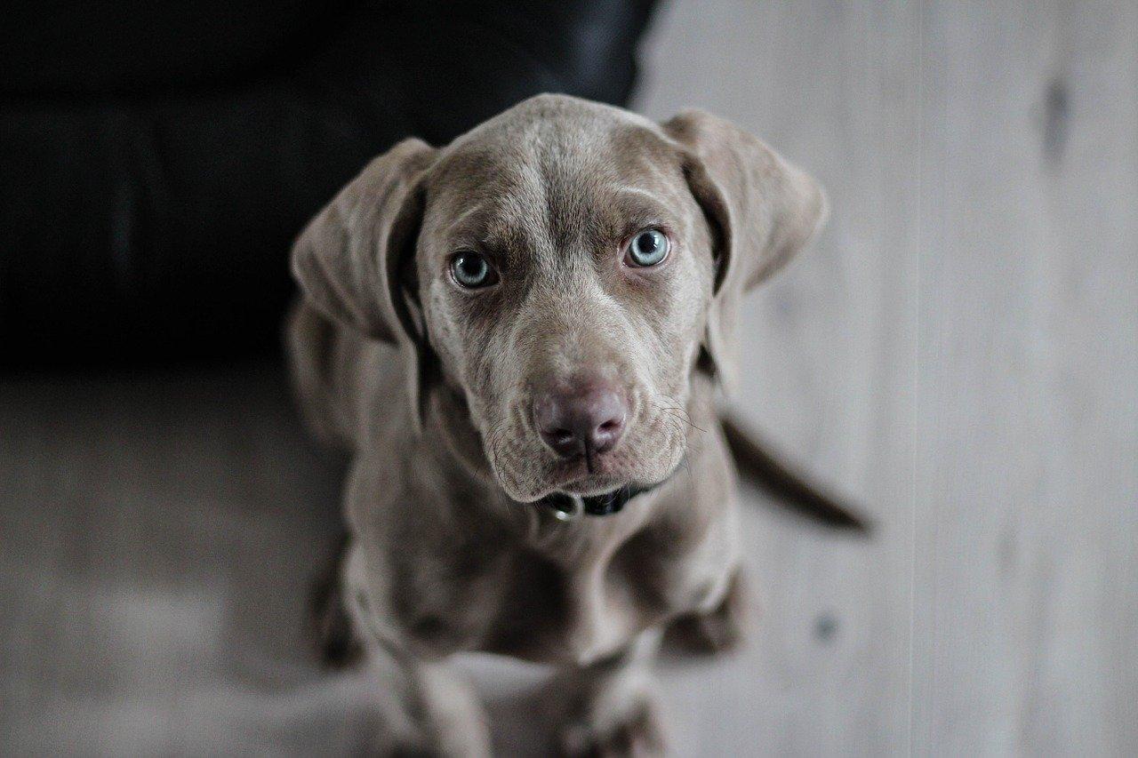 Niezbędny element psiej wyprawki